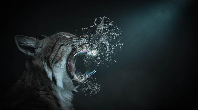 cat-bubbl_960x235.jpg