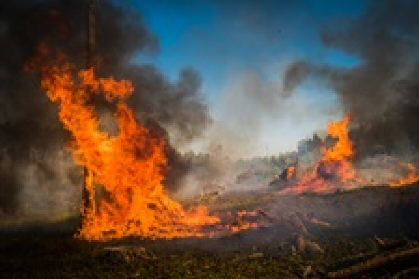 Climate drought forest fire Fotolia 230x150