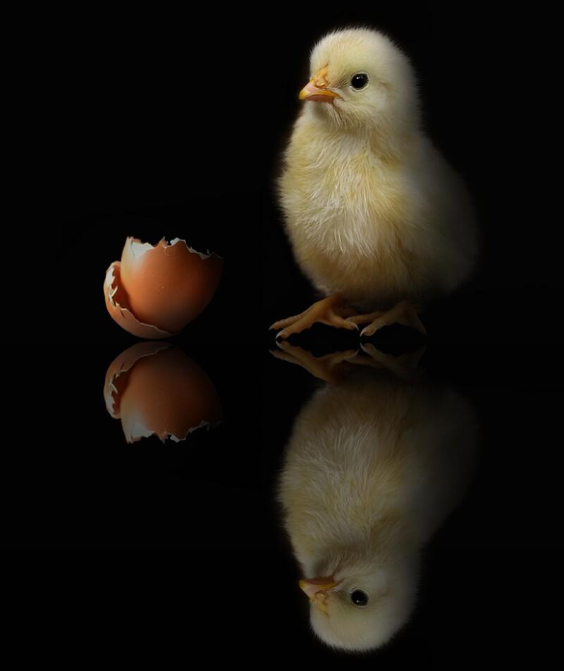 chicken-egg-780