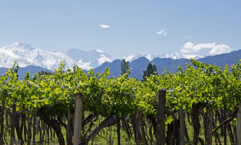 Province of Mendoza, wine, malbec, Andes, mountains, vineyards, Argentina, 575