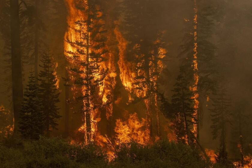 Lower Echo Lake, United States. 31st Aug, 2021. Trees explode in flames during the Caldor fire near Lower Echo Lake, California on Monday, August 30, 2021. The city of South Lake Tahoe is under evacuation orders. Photo by Peter DaSilva/UPI Credit: UPI/Ala
