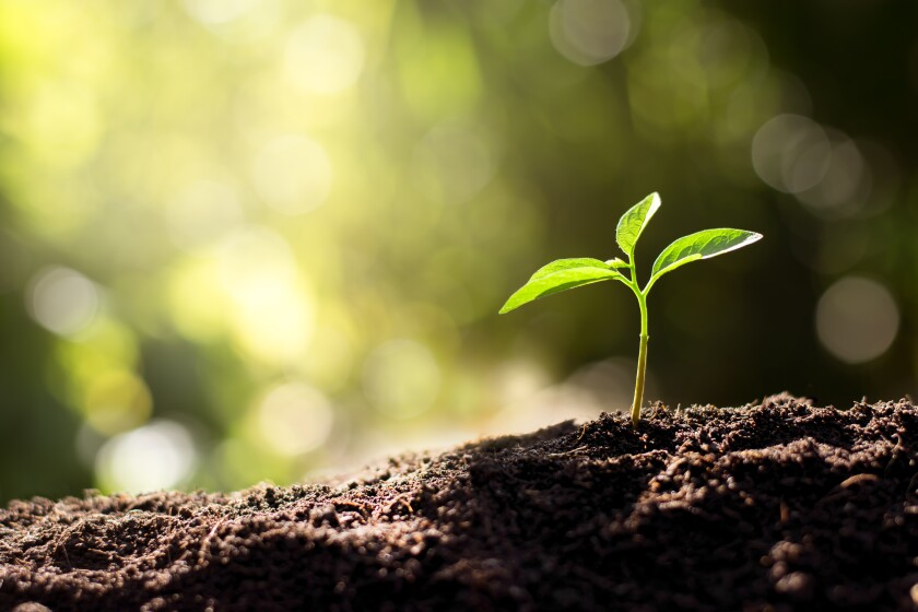 The,Seedling,Are,Growing,From,The,Rich,Soil,To,The