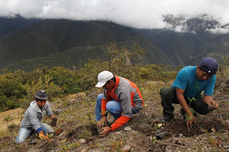 Peru-amazon-reforestation-Reuters-960.jpg