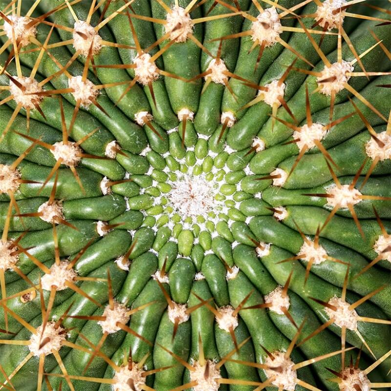 Cactus_780
