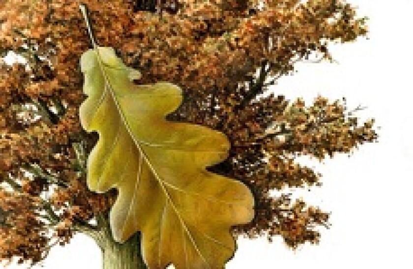 fair oaks 230x