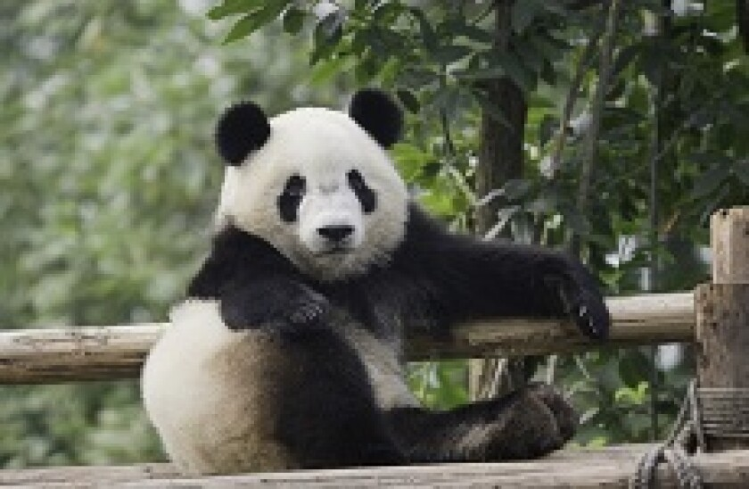 panda stretch px230