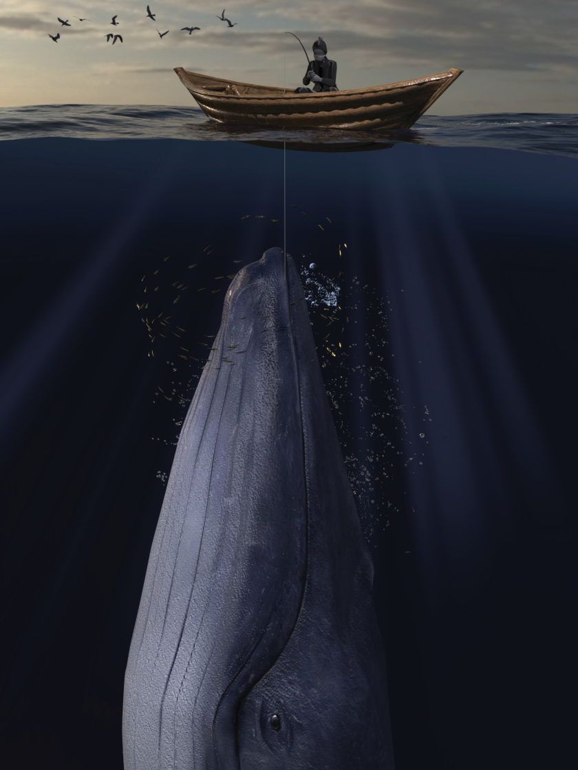 iStock whale EU recovery png 1920px.png
