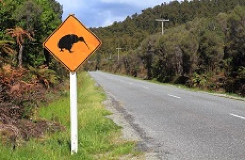 New_Zealand_Kiwi_Fotolia_230x150