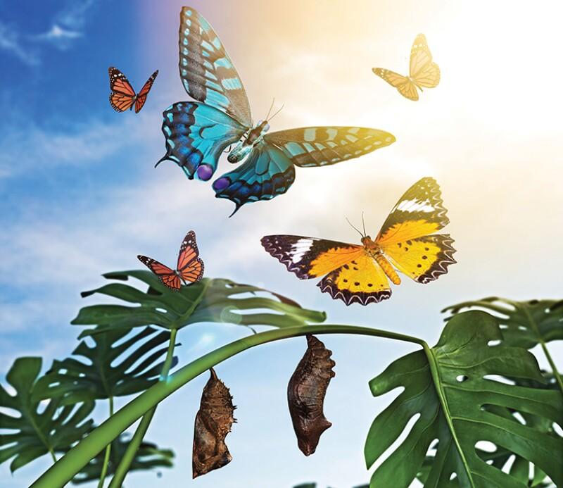 Butterflies_780