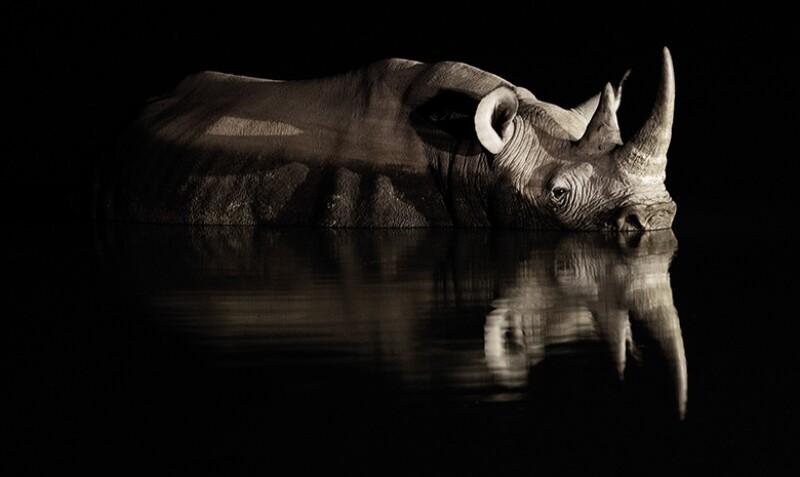 rhino_cover_780
