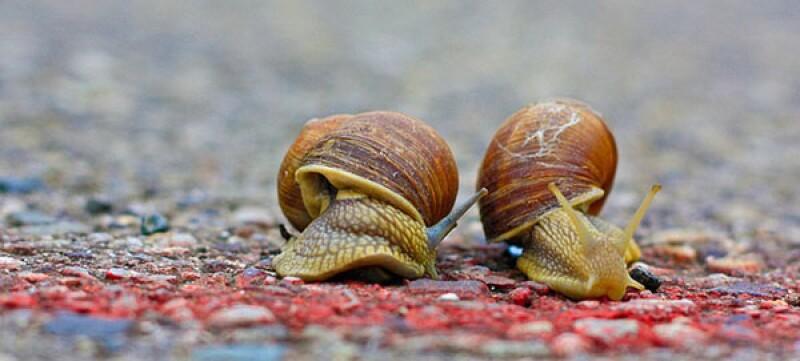 snails finish line-600