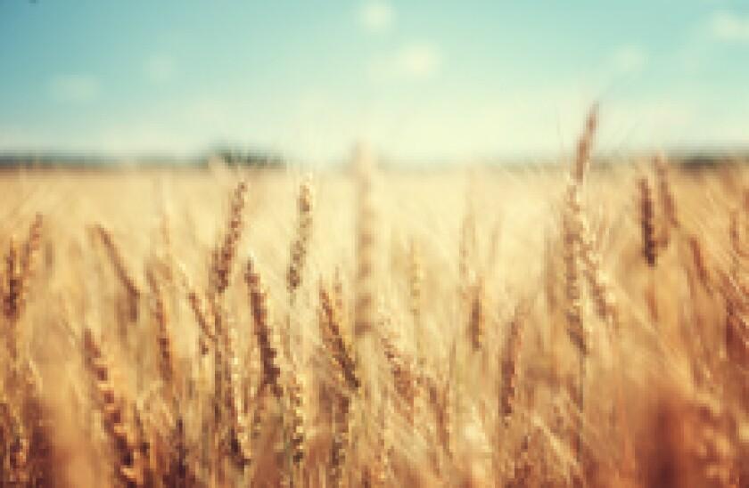 Wheat adobe 230x150