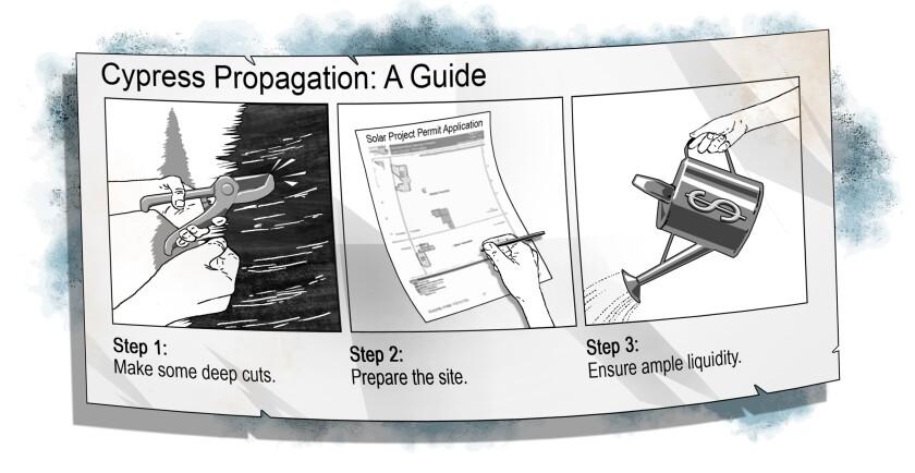 Cypress Creek cartoon.jpg