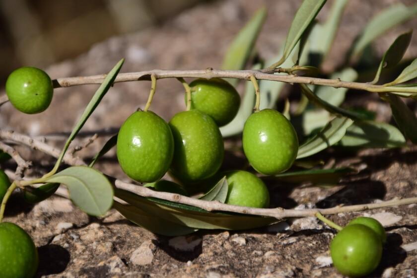 Olives - green