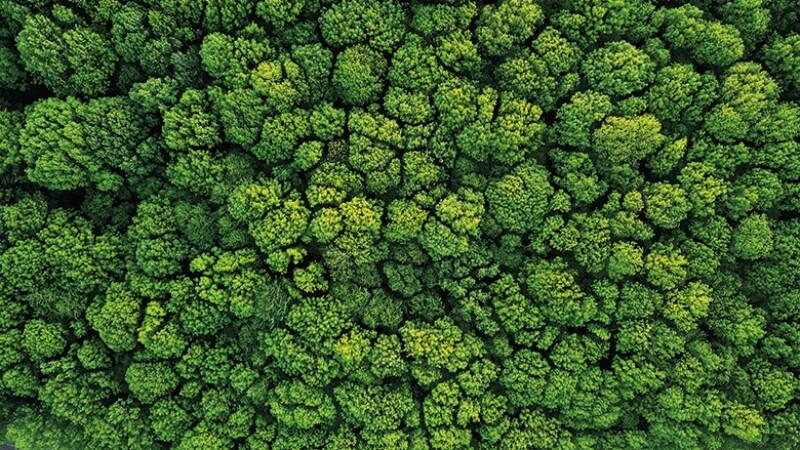 tree-cover-istock-780.jpg