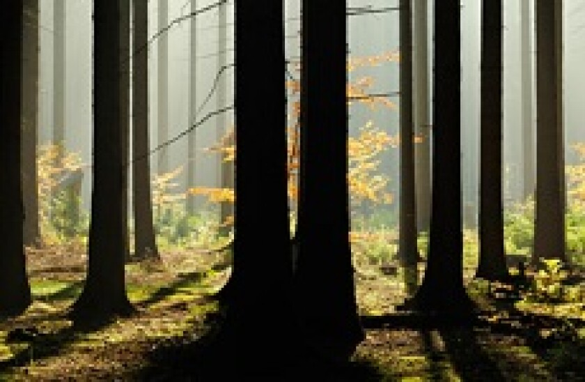 Borregaard forest 230x150