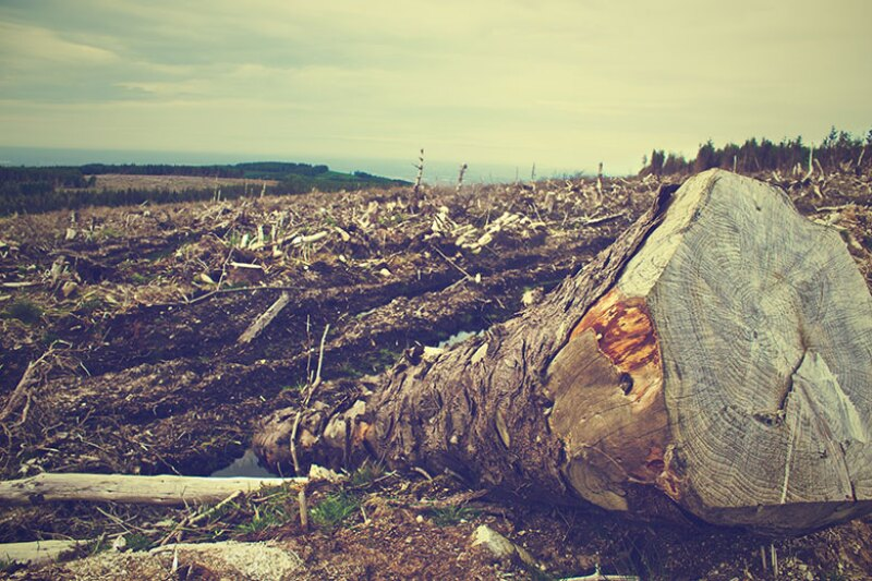 deforestation-trees-chopped-780.jpg