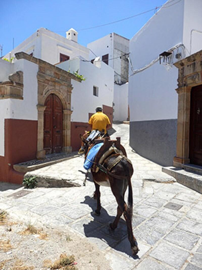 Greece donkey-300