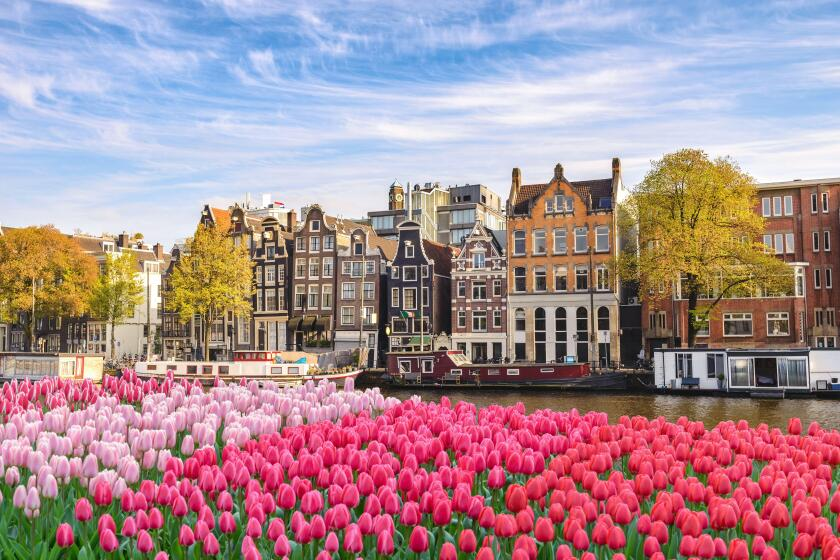 Amsterdam Netherlands, city skyline Dutch house at canal waterfront with spring tulip flower. Image shot 02/2019. Exact date unknown.