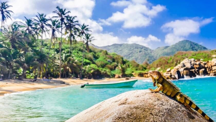 Colombia, Parque Tayrona, iguana, Caribbean, sea, environment, forest, LatAm, 575