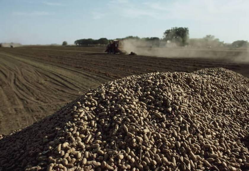 Argentina, grain, agro, exports, LatAm, debt, restructuring, 575