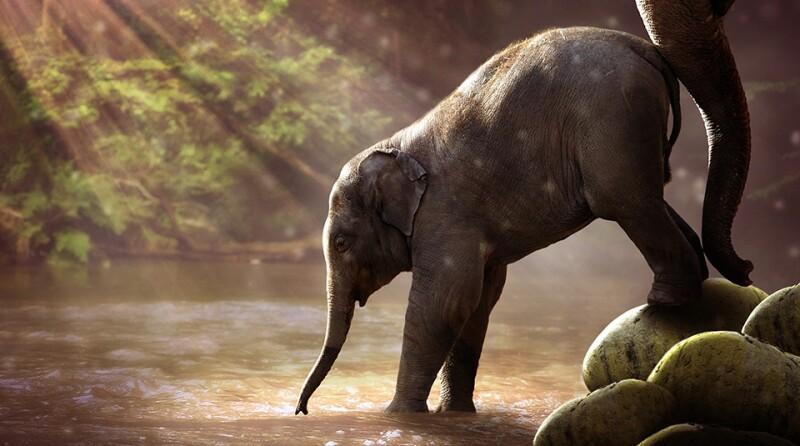 elephant-water-2380009_1920_960x535.jpg