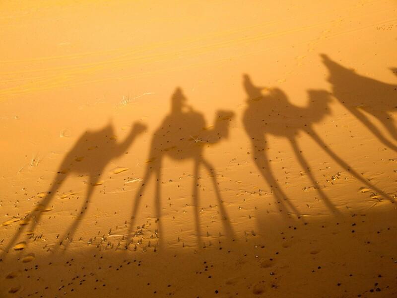camels 780