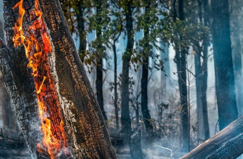 Amazon forest fire deforestation from Adobe 3Dec20 575x375