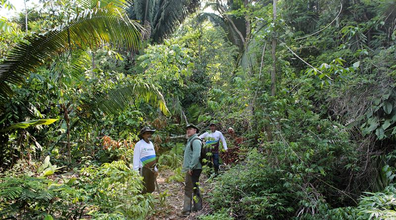 Amazon-Brazil-rainforest-carbon-scientists-960x535.png