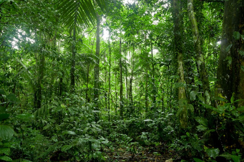 Brazil, amazon rainforest, pulp, paper, Suzano, LatAm, South America, 575
