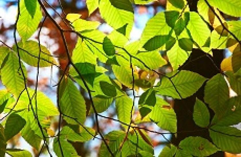Leaves_230px