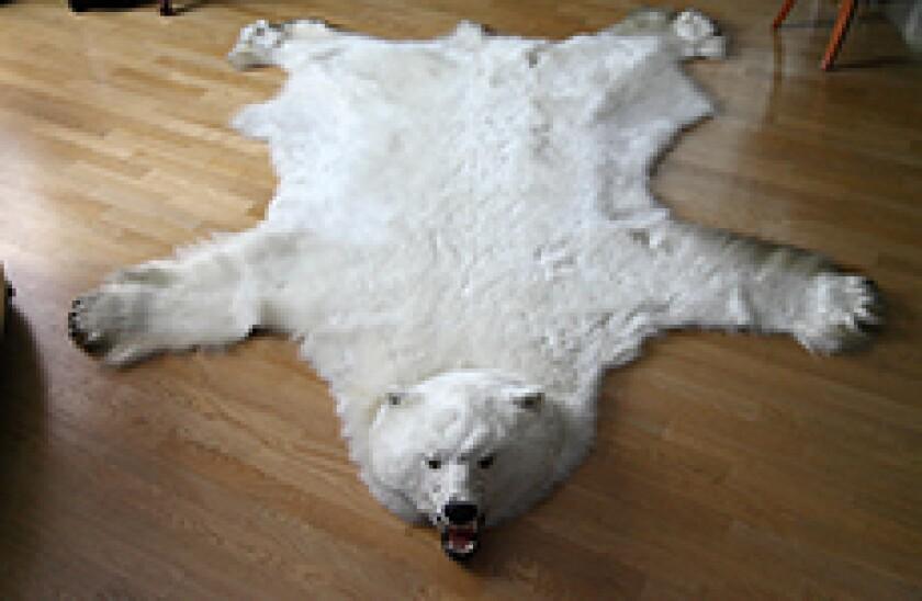 wheres the bear
