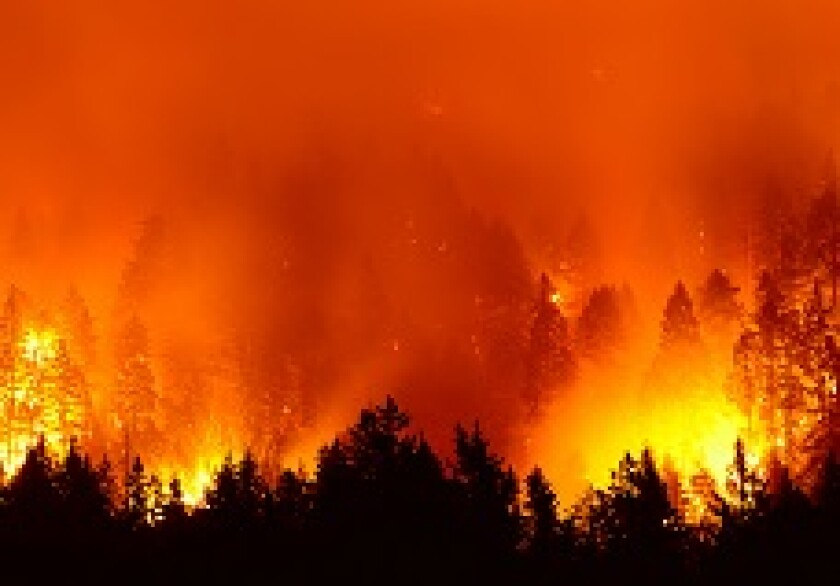 Forest fire wildfire flames from Adobe 230x150