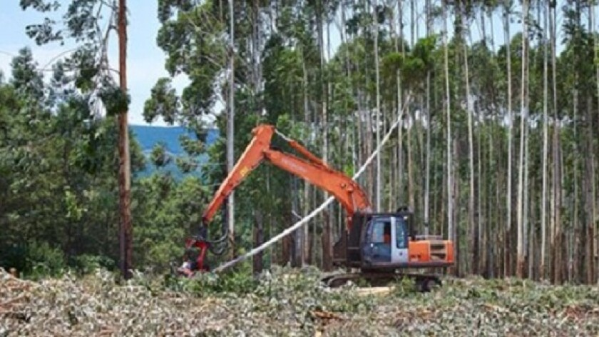 Mondi tree harvesting forestry from co media gallery 575x375