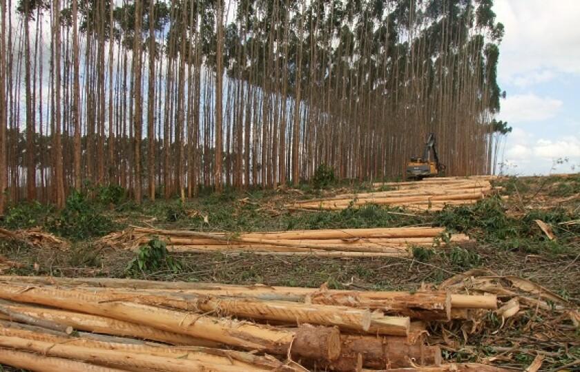 Brazil paper pulp eucalyptus from Adobe 2Sep20 575x375
