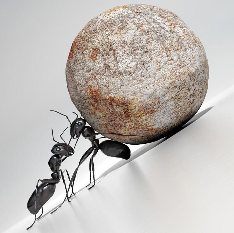 Ants-boulder-struggle-against-odds-istock-960.jpg