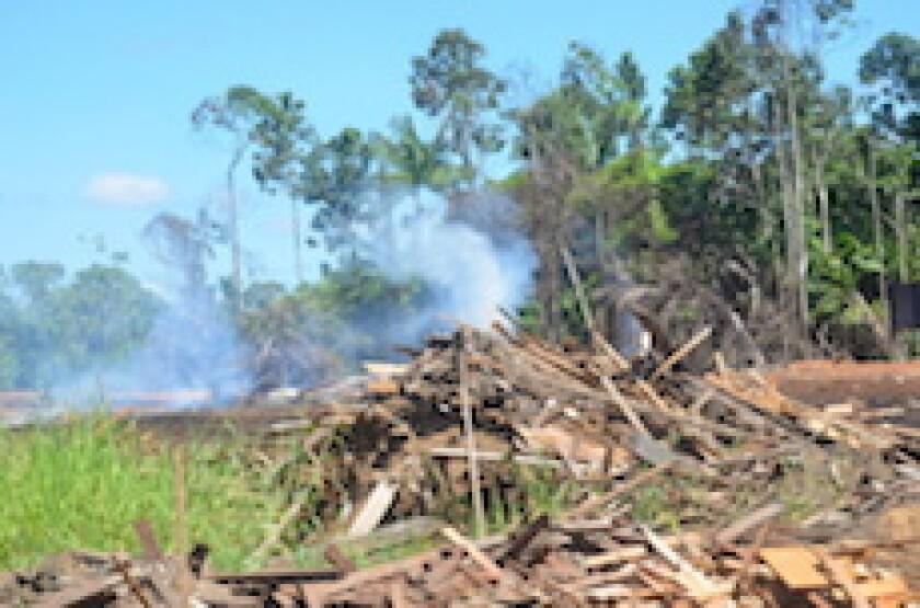 Suriname, forest, Chinese, fire, burning, Paramaribo, LatAm