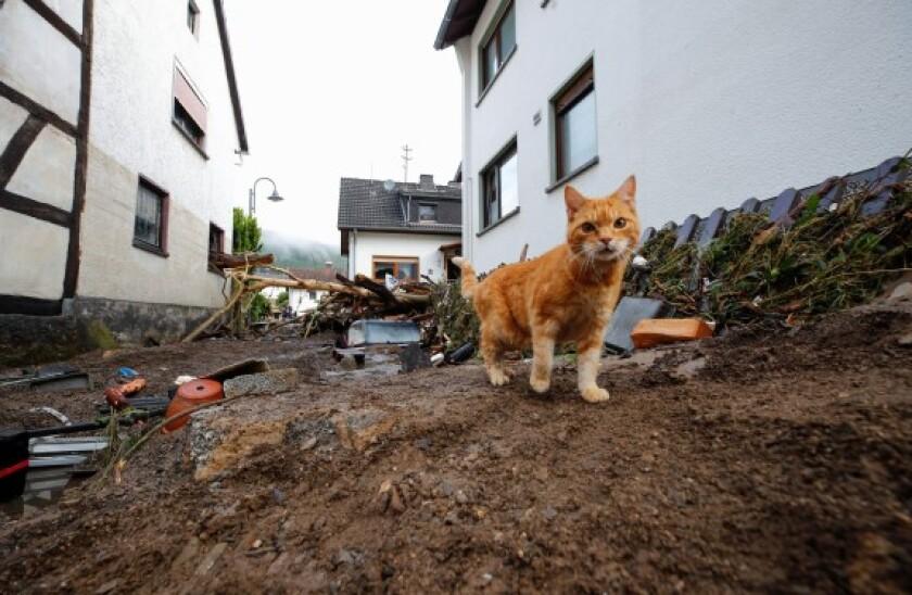 Alamy Cat Floods Germany 575x375 20Jul21