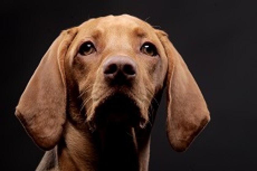 Dog pet from Fotolia 230x150