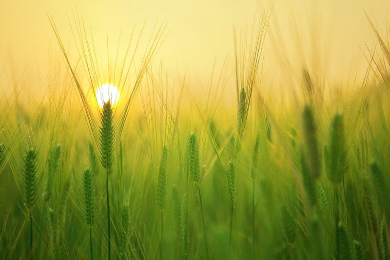 field-agriculture-farming-free-960.jpg