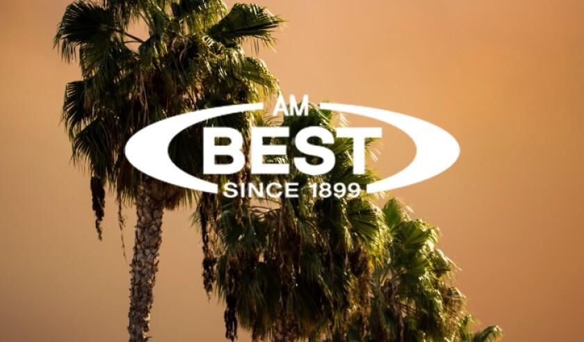 AM Best palm trees wildfires.jpg