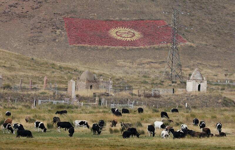 Kyrgyzstan-flag-cows-R-780