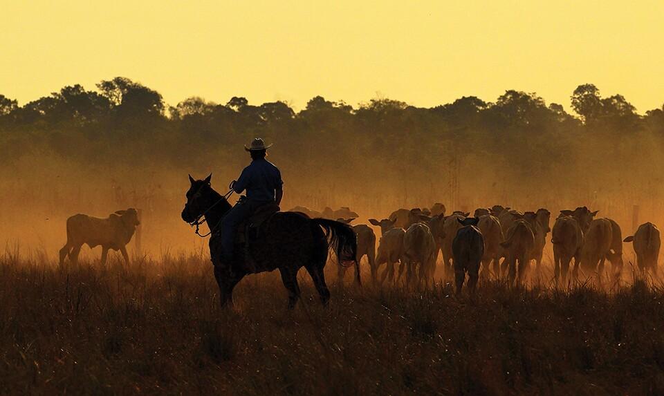Cattle-herder-sunrise-Getty-960.jpg