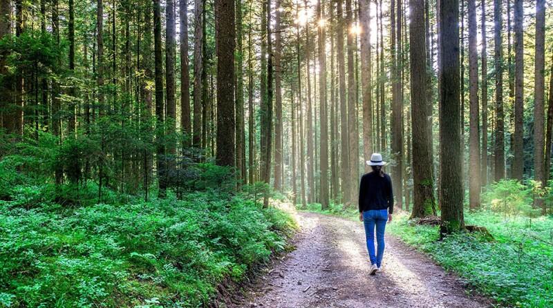 green-path-woman-nature-environment-woods-960.jpg
